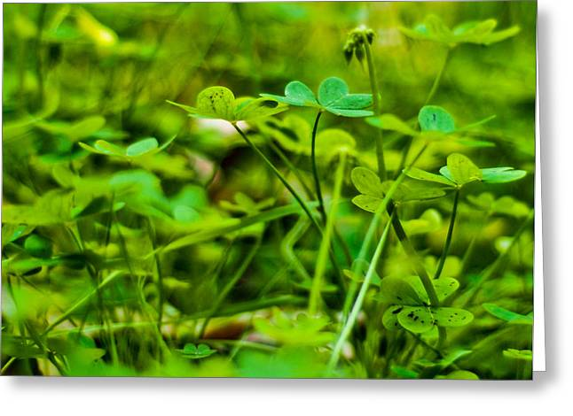 Green Morning  Greeting Card by Andrew Raby