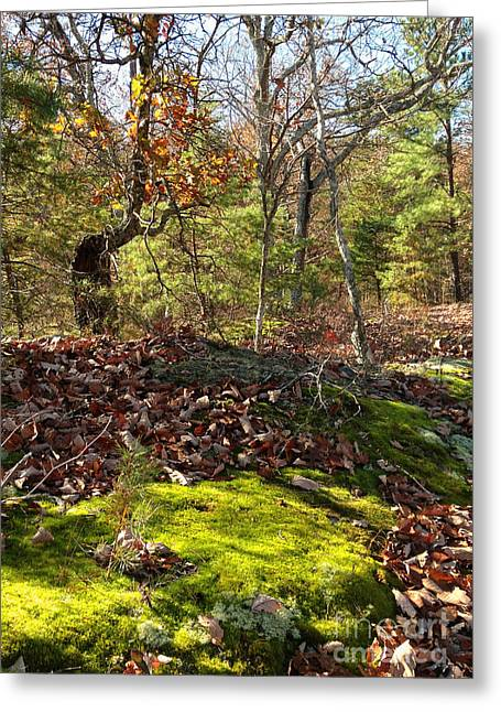 Green Moss By The Road Greeting Card by Janet Felts