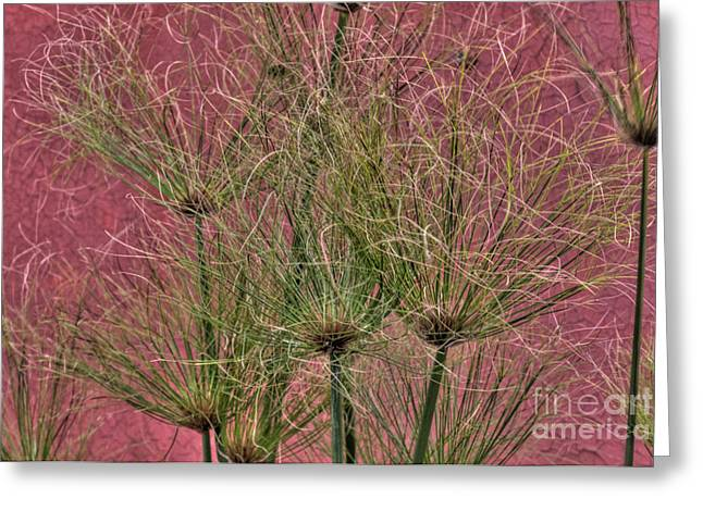 Green On Pink Greeting Card by Deborah Smolinske