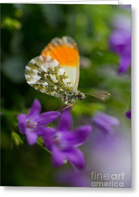 Green-orange Butterfly Sitting On The Violet Bells Flowers Greeting Card