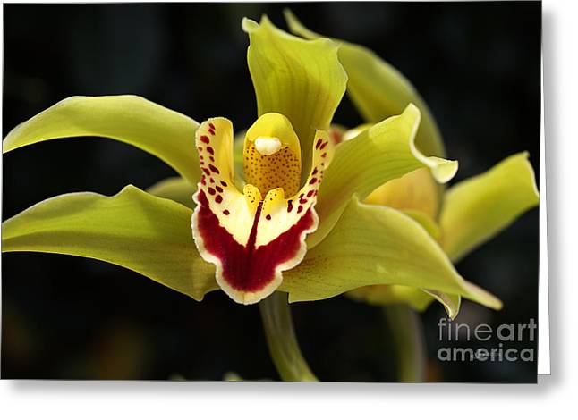 Green Orchid Flower Greeting Card by Joy Watson