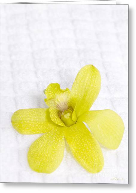 Green Orchid On Spa Towel Greeting Card by Iris Richardson