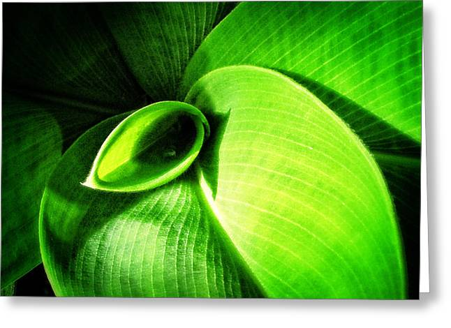Green Paradise - Leaves By Sharon Cummings Greeting Card