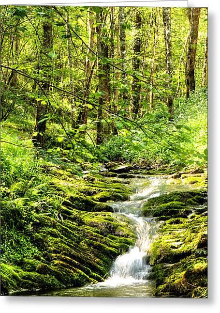 Green River No2 Greeting Card by Weston Westmoreland
