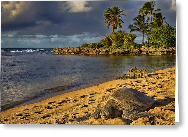 Green Sea Turtle At Sunset Greeting Card