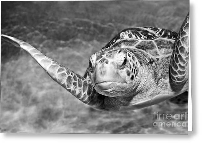 Green Sea Turtle. Greeting Card by Jamie Pham