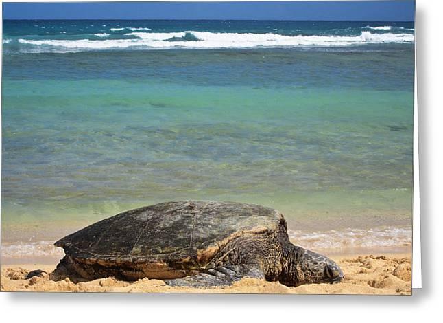 Green Sea Turtle - Kauai Greeting Card by Shane Kelly