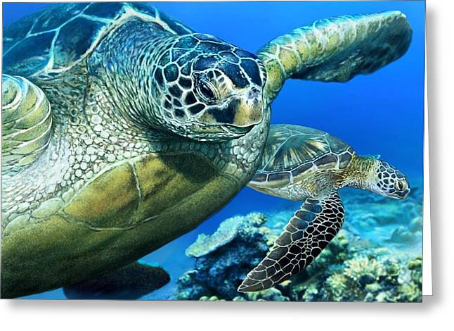 Green Sea Turtle Greeting Card by Owen Bell