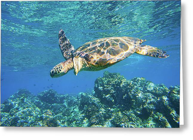 Green Sea Turtle Swimming In Ocean Sea Greeting Card by Design Pics Vibe