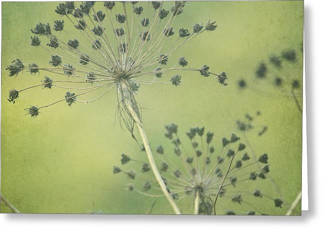 Green Seeds Greeting Card by Rani Meenagh