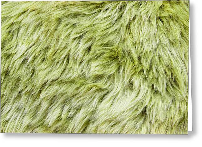 Green Sheepskin Greeting Card by Tom Gowanlock