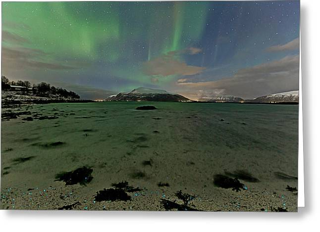 Green Sky Over The Beach Greeting Card by Frank Olsen