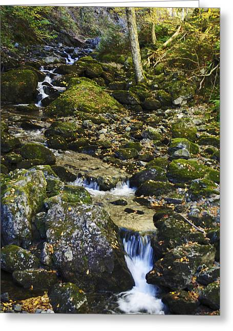 Green Stream  Greeting Card by Julie Smith