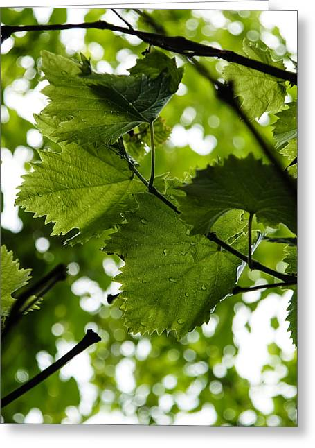 Green Summer Rain With Grape Leaves - Vertical Greeting Card by Georgia Mizuleva