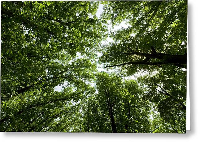 Green Summer Trees Greeting Card by Ioan Panaite