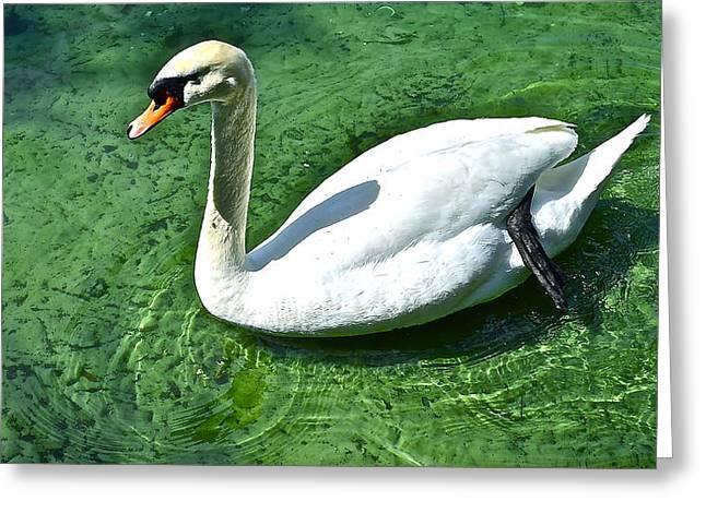 Green Swan Greeting Card
