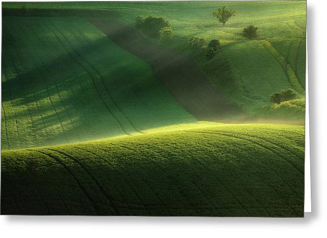 Green Tones Of Spring Greeting Card