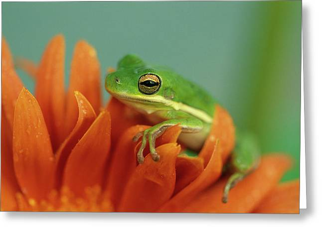 Green Tree Frog On Flower In Garden Greeting Card by Jaynes Gallery