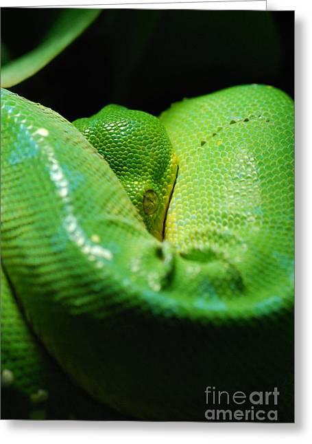 Green Tree Python by Sarka Olehlova