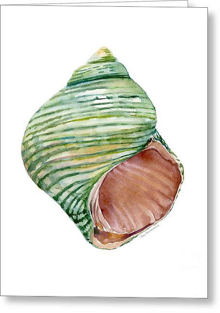 Green Turbo Shell Greeting Card by Amy Kirkpatrick