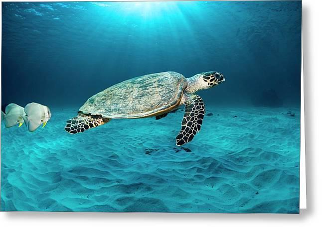 Green Turtle And Circular Spadefish Greeting Card