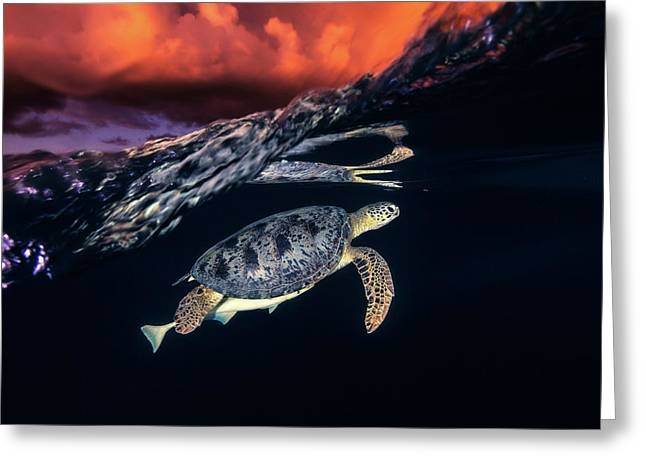 Green Turtle And Sunset - Sea Turtle Greeting Card