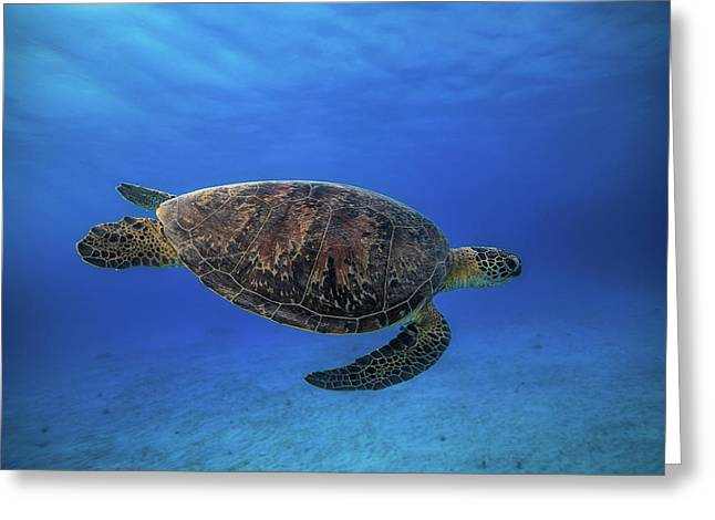 Green Turtle In The Blue Greeting Card by Barathieu Gabriel