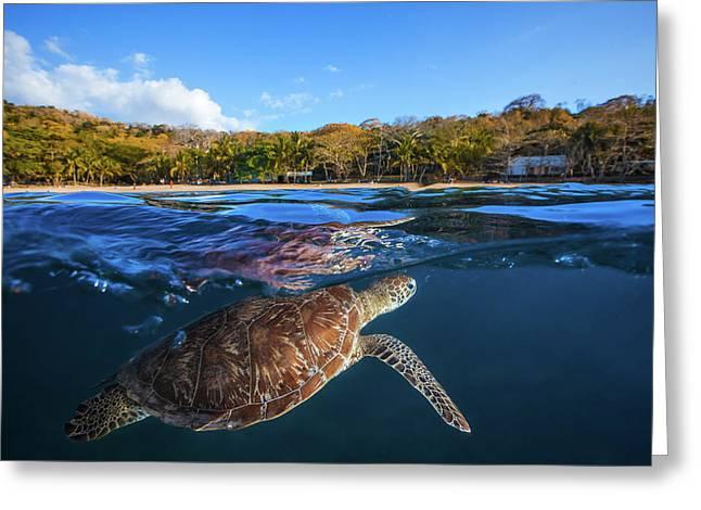 Green Turtle - Sea Turtle Greeting Card by Barathieu Gabriel