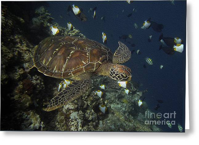 Hawksbill Turtle Greeting Card by Sergey Lukashin