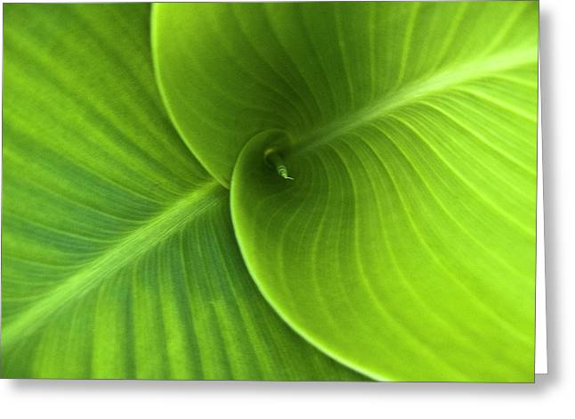 Green Twin Leaves Greeting Card by Heiko Koehrer-Wagner