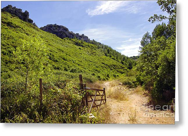 Green Valley Greeting Card by Carlos Caetano