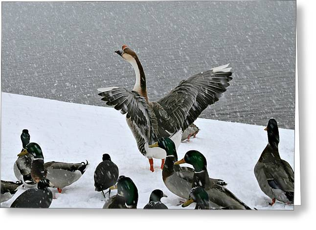 Green Valley Ducks Greeting Card