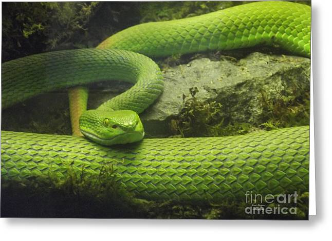 Green With Envy Greeting Card by Jennifer Lavigne