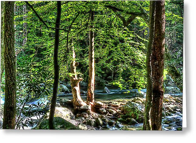 Greenbriar Landscape Greeting Card by Barry Jones