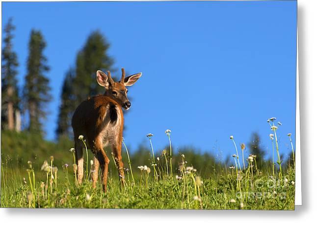 Greener Fields Greeting Card