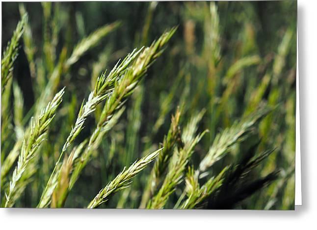 Greener Grass Greeting Card by Kaleidoscopik Photography