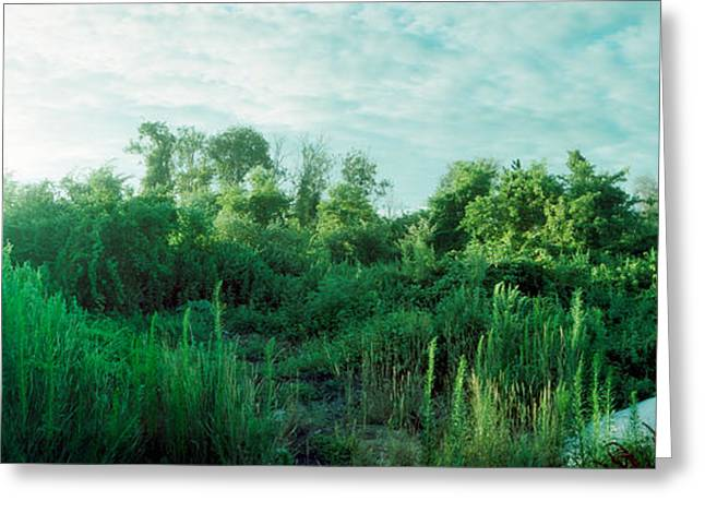 Greenery Along Fort Tilden Beach, Fort Greeting Card by Panoramic Images