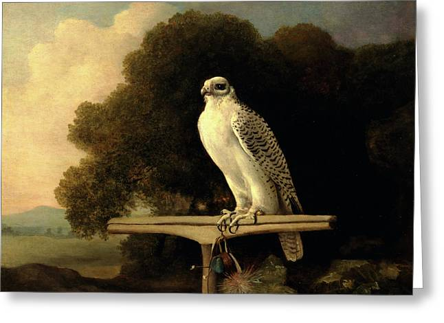 Greenland Falcon Gyr Falcon Signed And Dated Greeting Card by Litz Collection