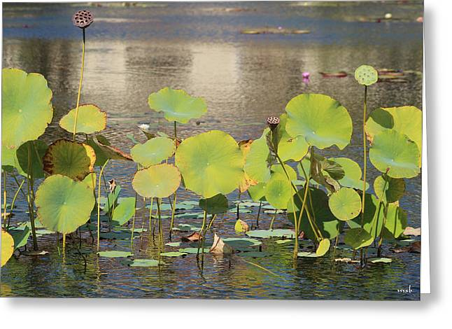 Greens On A Pond 3 Greeting Card by Mark Steven Burhart