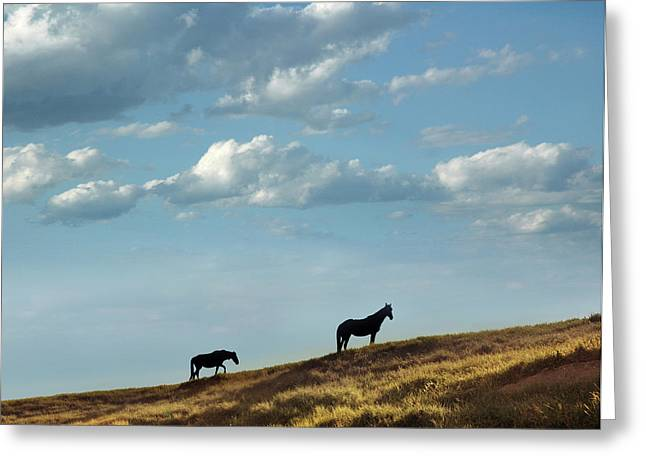 Greenwood County Grazers Greeting Card