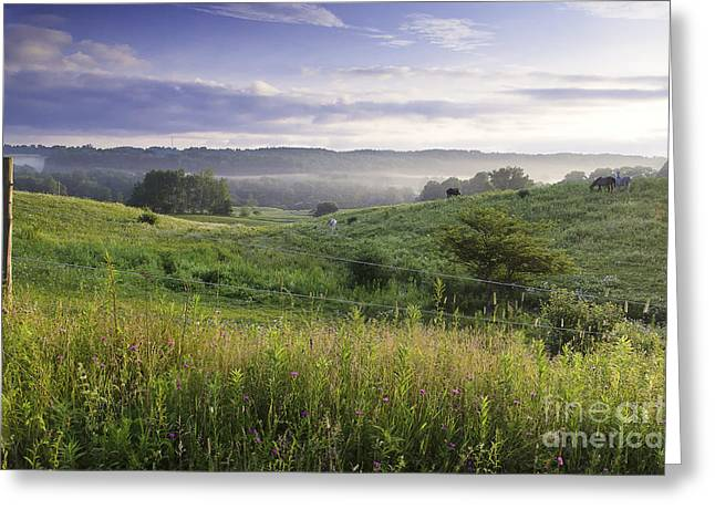 Greet The Day Greeting Card by Michele Steffey
