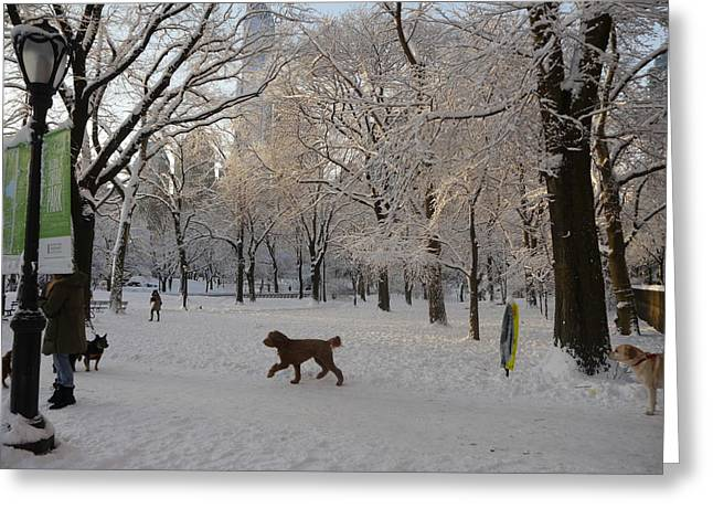 Greeting Card featuring the photograph Greeting Friends In Central Park by Winifred Butler