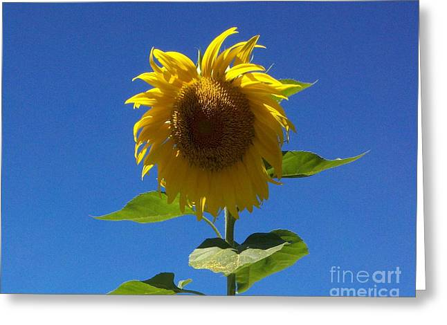Sunflower With Open Arms Greeting Card