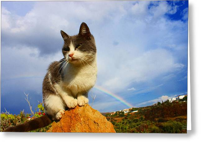 Grey Cat And Rainbow Greeting Card by Augusta Stylianou