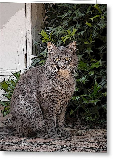 Grey Cat Greeting Card by Donald Williams