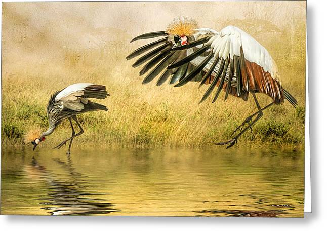 Greeting Card featuring the photograph Grey Crowned Cranes by Brian Tarr