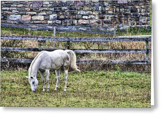 Grey Horse Greeting Card by JAMART Photography