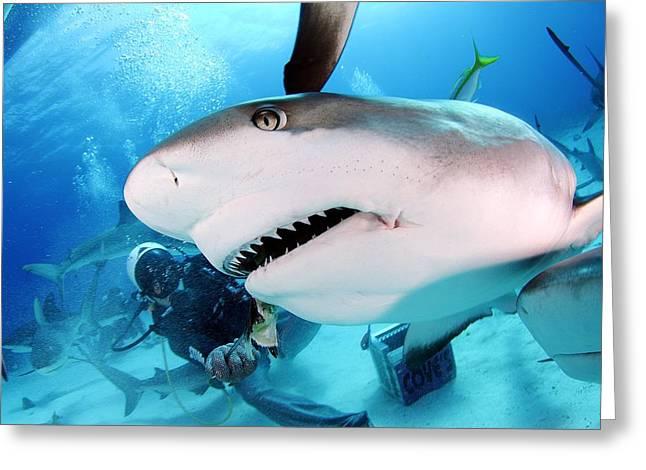 Grey Reef Shark Greeting Card by Liudmila Di