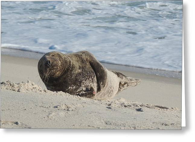 Grey Seal Pup On Beach Greeting Card by Kimberly Perry