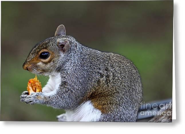Grey Squirrel Tucking In Greeting Card